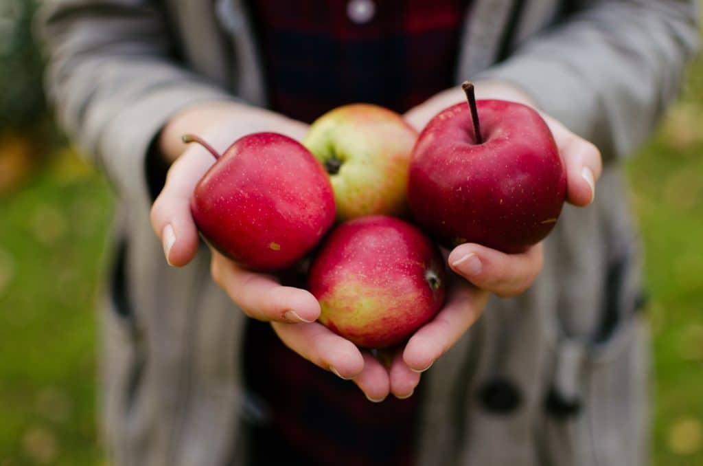 Spiritual Fruitfulness: Pruning for Health